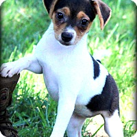 Adopt A Pet :: Trixie~adopted! - Glastonbury, CT