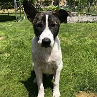 Adopt A Pet :: Dusty Dude - Racine, WI