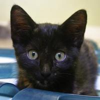 Adopt A Pet :: Sol - Hastings, NE