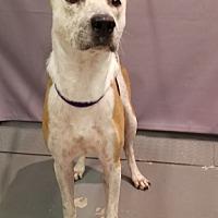 Adopt A Pet :: MELVA - Tucson, AZ