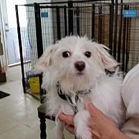 Adopt A Pet :: Coconut - Pipe Creek, TX