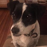 Adopt A Pet :: Lady - Long Beach, CA