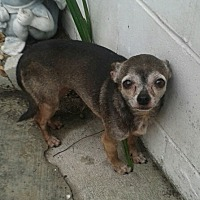 Adopt A Pet :: Tiki - Chiefland, FL