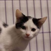 Adopt A Pet :: Dean - Huntingdon, PA