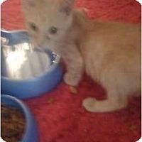 Adopt A Pet :: Squidward - Mobile, AL