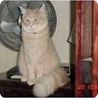 Adopt A Pet :: Daniel - Pasadena, CA