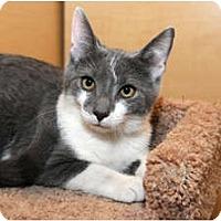 Adopt A Pet :: Danny - Farmingdale, NY