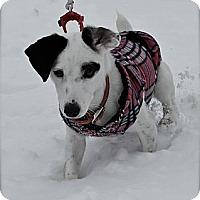 Adopt A Pet :: Whisper - Hastings, NY