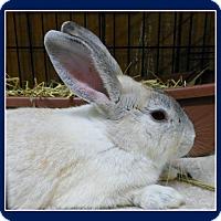 Adopt A Pet :: Butch - Williston, FL