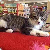 Adopt A Pet :: Rootie - Orinda, CA