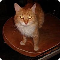 Adopt A Pet :: Hazel - Saint Albans, WV