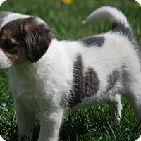Adopt A Pet :: Anna - Providence, RI
