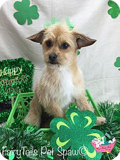 Terrier (Unknown Type, Small) Mix Dog for adoption in Winchester, Kentucky - Precious