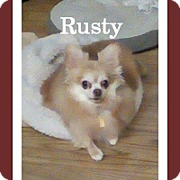 Adopt A Pet :: Rusty - Shawnee Mission, KS