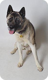 Akita Mix Dog for adoption in Fruit Heights, Utah - Rally
