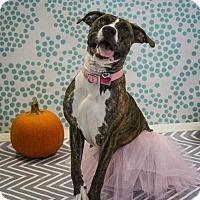 Adopt A Pet :: Nina - Houston, TX