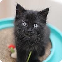 Adopt A Pet :: Teddi - Richmond, VA
