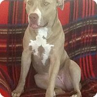Adopt A Pet :: Asia - Castro Valley, CA