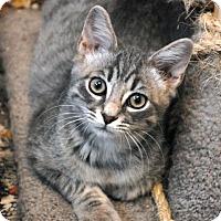 Adopt A Pet :: Luke - Shelbyville, TN