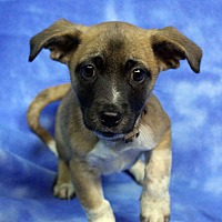 Adopt A Pet :: Deuce - Westminster, CO