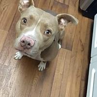 Adopt A Pet :: Beau - San Diego, CA