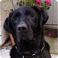 Adopt A Pet :: PABLO - San Diego, CA