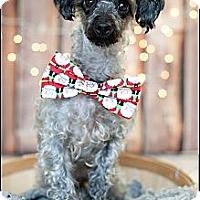 Adopt A Pet :: Juneau - Hilliard, OH