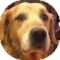 Adopt A Pet :: Oliver - Denver, CO