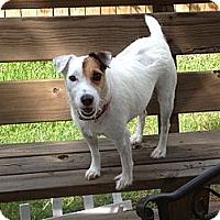 Adopt A Pet :: Gypsy in Houston - Houston, TX