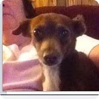 Adopt A Pet :: Cocoa - Ranger, TX