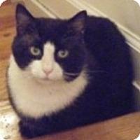 Adopt A Pet :: Petey - Kensington, MD