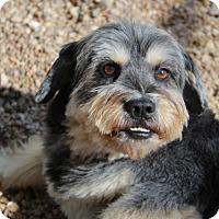 Adopt A Pet :: Bergdorf - Meet Him!! - Norwalk, CT