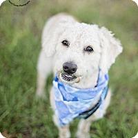 Adopt A Pet :: Tucker - Kingwood, TX