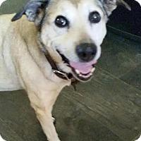 Adopt A Pet :: Shelby - Petaluma, CA