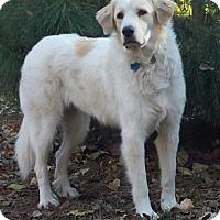 Adopt A Pet :: Dinah  *Adopted - Tulsa, OK