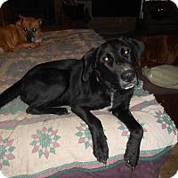 Adopt A Pet :: Wally - North Jackson, OH