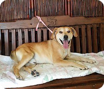 Mixed Breed (Medium) Mix Dog for adoption in Atchison, Kansas - Ebbo