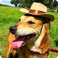 Adopt A Pet :: Linda Byrd - N - Huntington, NY