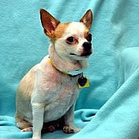 Adopt A Pet :: Skip (courtesy listing for the Oregon Humane Society) - McKenna, WA