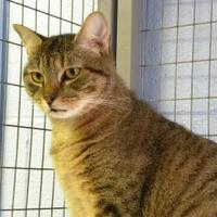 Adopt A Pet :: Loggerhead - Kingston, NY