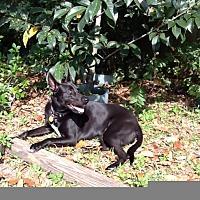 Adopt A Pet :: Kymani - Tallahassee, FL