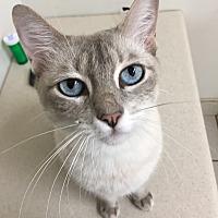 Adopt A Pet :: Luna - Sunny Isles Beach, FL