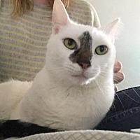 Adopt A Pet :: Sugah - Philadelphia, PA