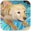 Photo 3 - Golden Retriever/Chow Chow Mix Puppy for adoption in Murphysboro, Illinois - Sandy