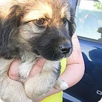 Adopt A Pet :: Reuben - Glastonbury, CT