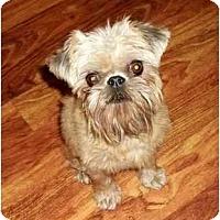 Adopt A Pet :: Sizzle - Adoption Pending - Jackson, MS