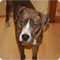 Adopt A Pet :: Gracie - ARDEN, NC