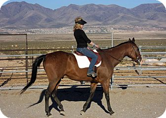 Thoroughbred Mix for adoption in Las Vegas, Nevada - Journey