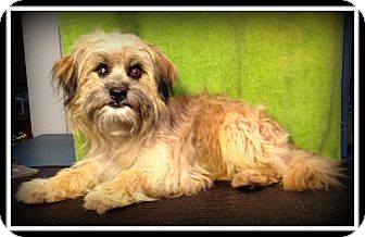 Terrier (Unknown Type, Small) Mix Dog for adoption in Indian Trail, North Carolina - Buddy