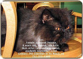 Persian Cat for adoption in Virginia Beach, Virginia - Tori